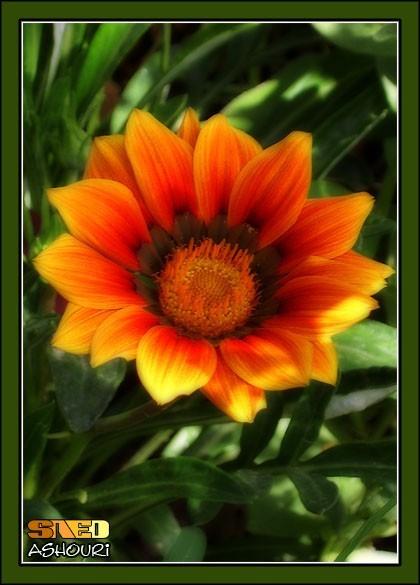 flower fire plant orange green