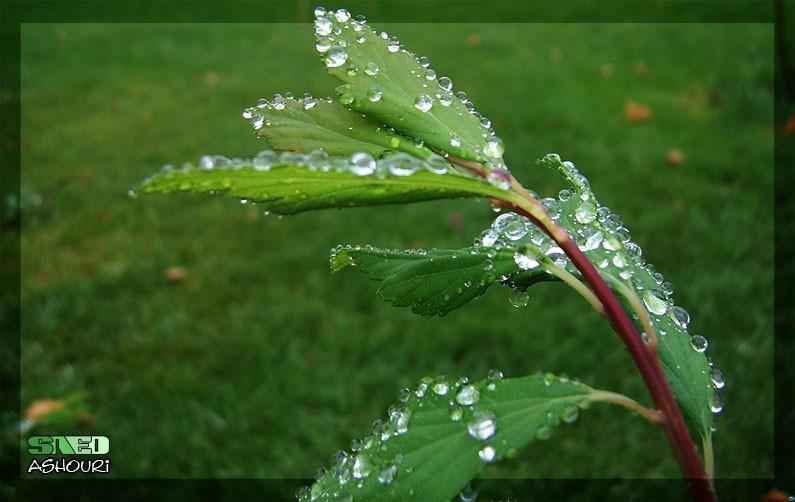 Muhamed mohammad mohamad green plant love