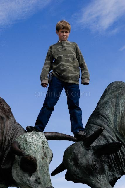 Kid standing on brass Bulls