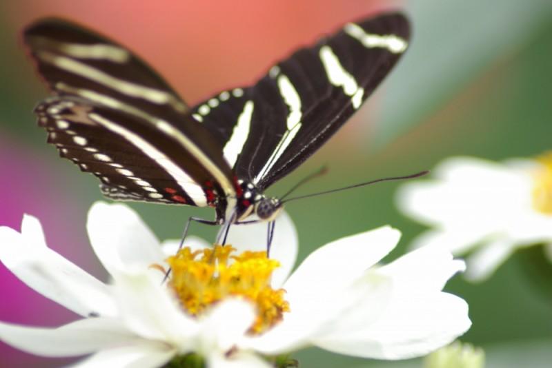 Butterfly macro shot