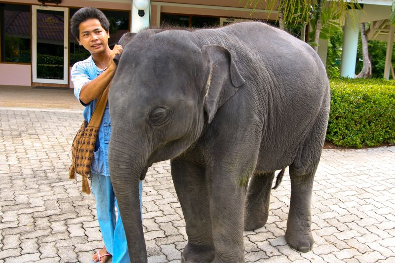 A boy and a boy elephant