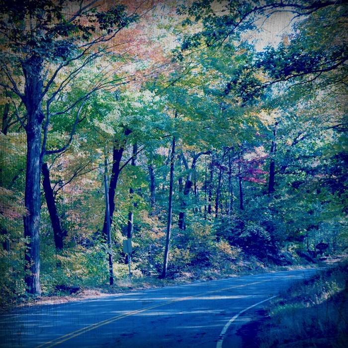 road tree darkroom