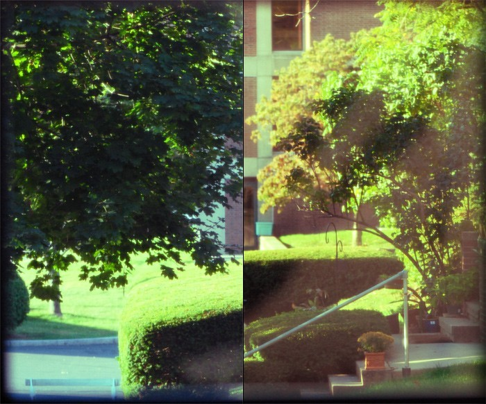darkroom window trees