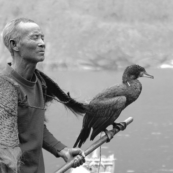 Old Fisherman with His Fishing Bird