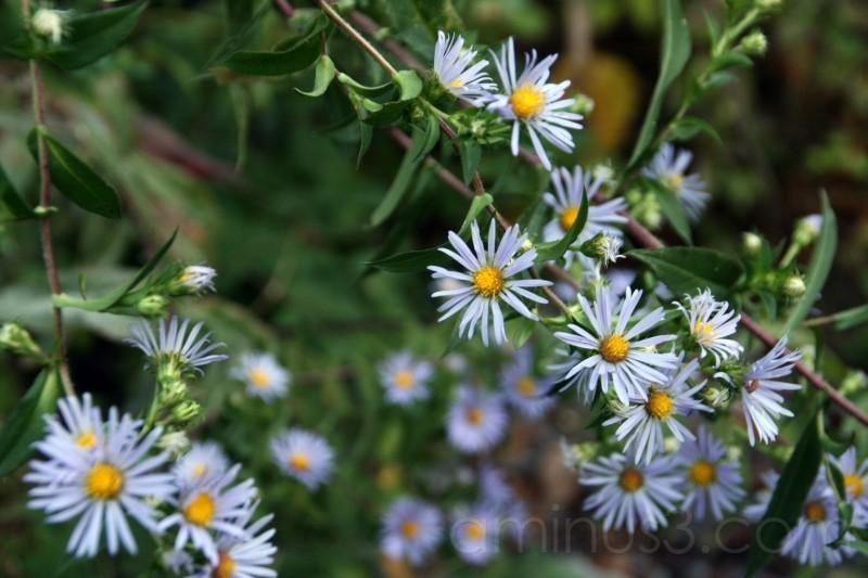 Mysterious Lavender Flower