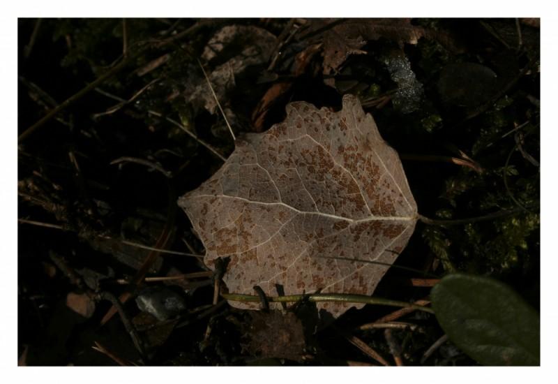 Leaf in da wood