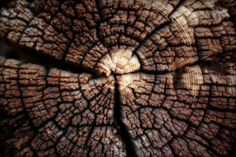 TreeSoul