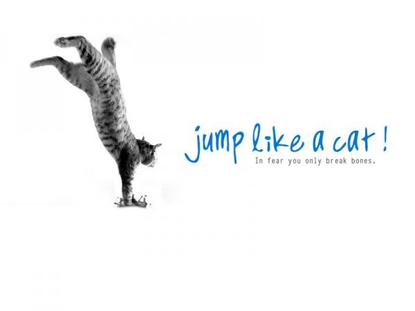 Free Fall !!!