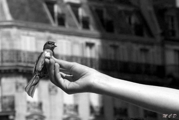 l'oiseau picore