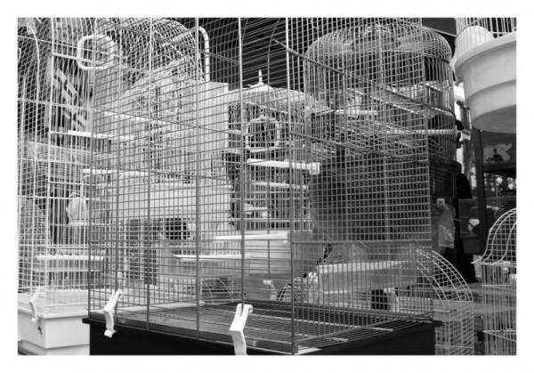 cages jaulas