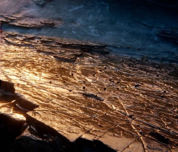 Wet rock & whelks