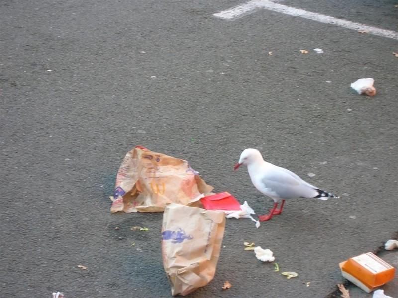 Seagull, trash.  - Jordan