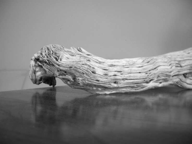 driftwood on a table