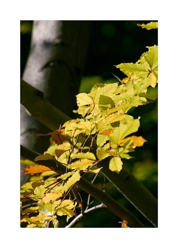 Herbstgedenken