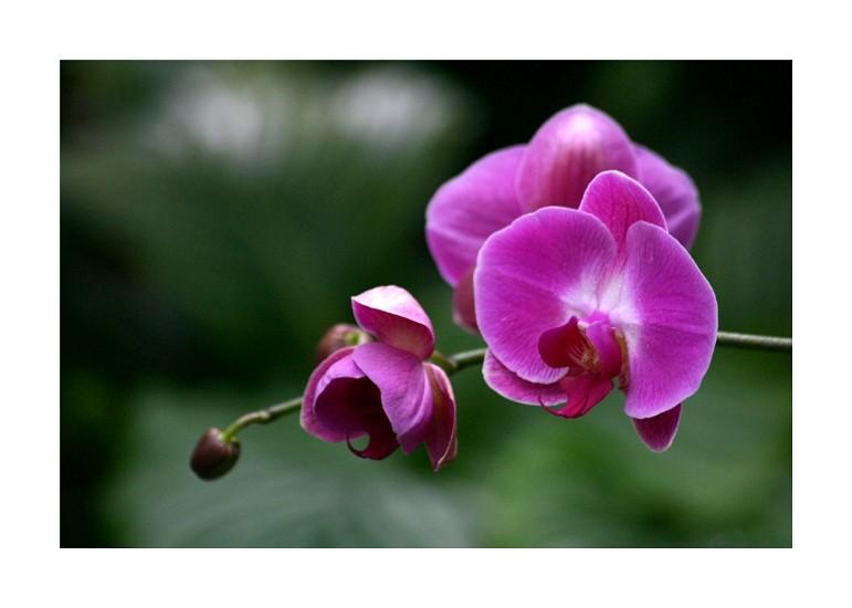 Im Orchideenhaus III
