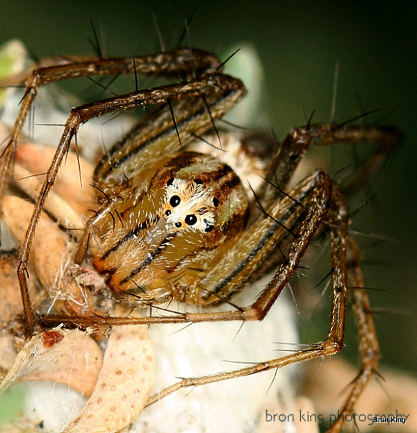 Spiky Spiny Spider