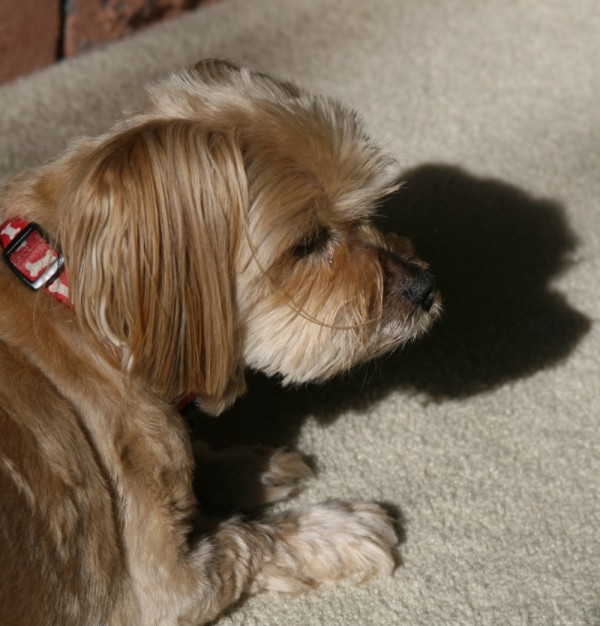 Little Dog, Big Shadow