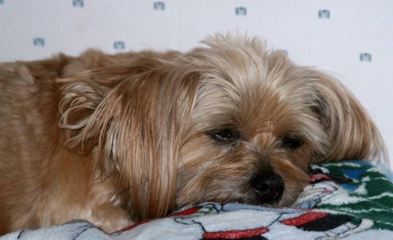 Asleep on the pillow