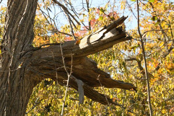 Dead Tree in the Woods