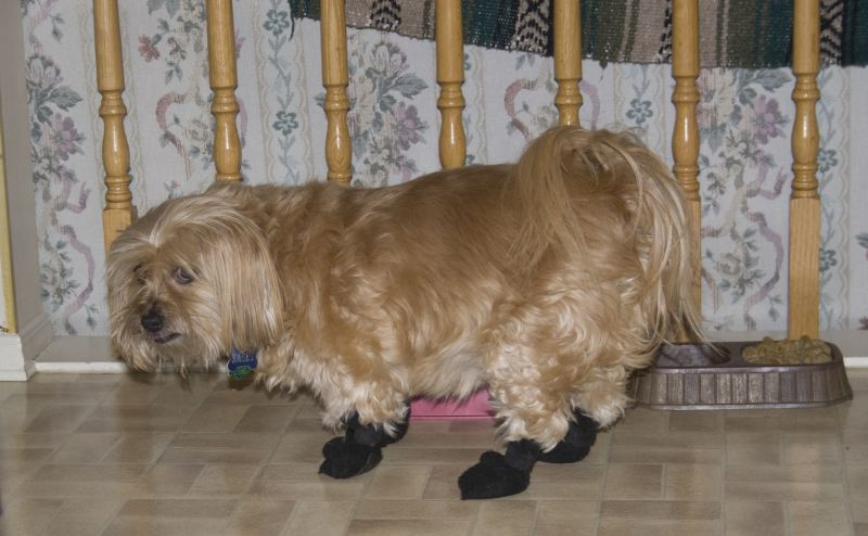 Doggie Boots