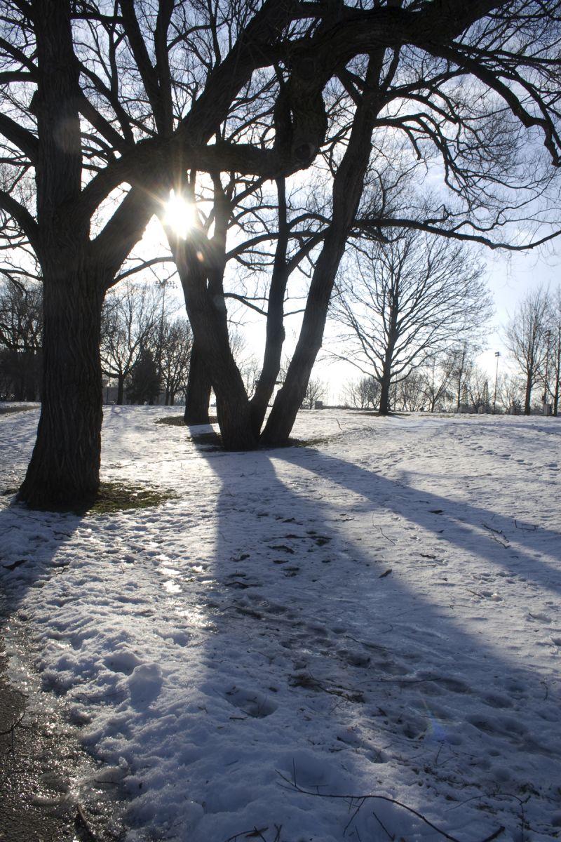 Sun through the Trees