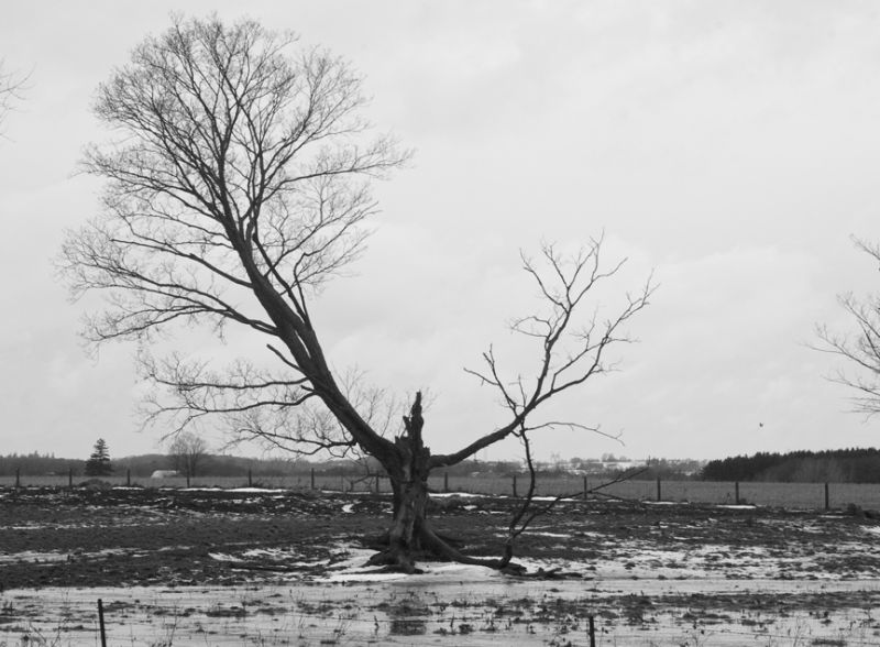 Old Tree on Cloudy Day