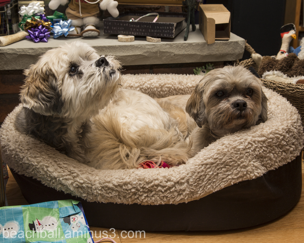 2 Doggies in a Basket