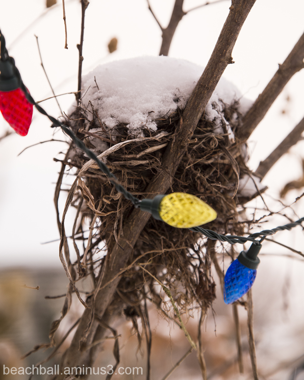 Decorated Nest