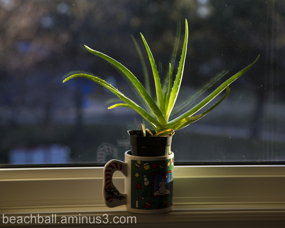Plant in the Window