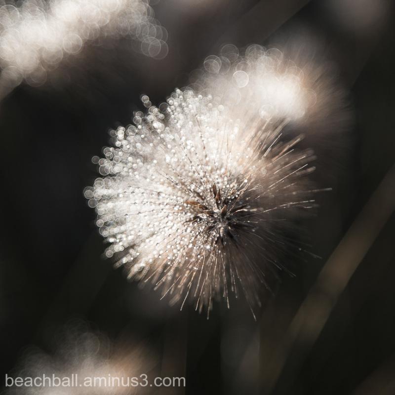 Bejeweled flower, 2
