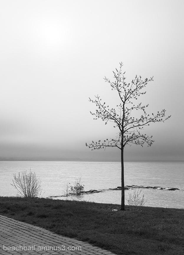 Black/White Silhouette