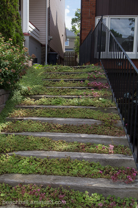 Flowery Steps