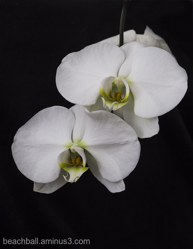 Wendy's Orchids