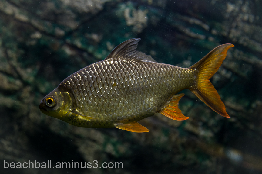 Fish from Madagascar