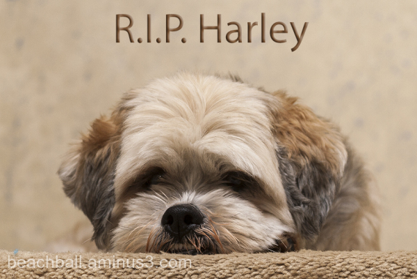Rest in Peace, Harley