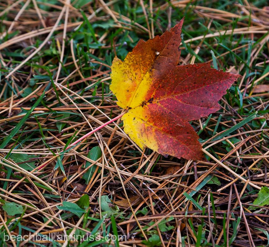 A leaf on the ground
