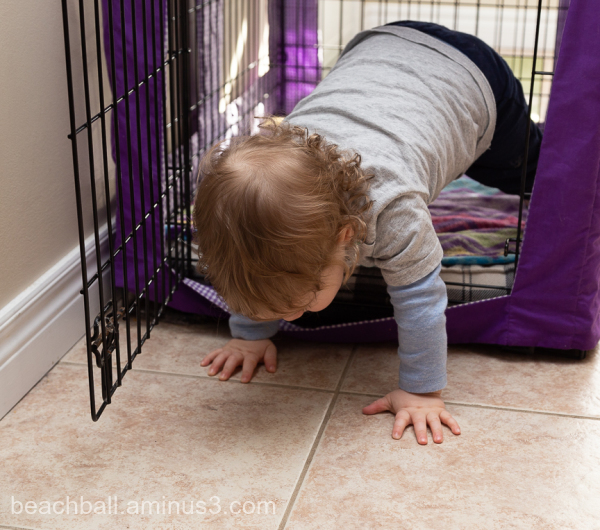 little boy crawling out of a dog cage