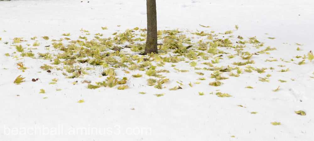 Leaves on snow under a tree