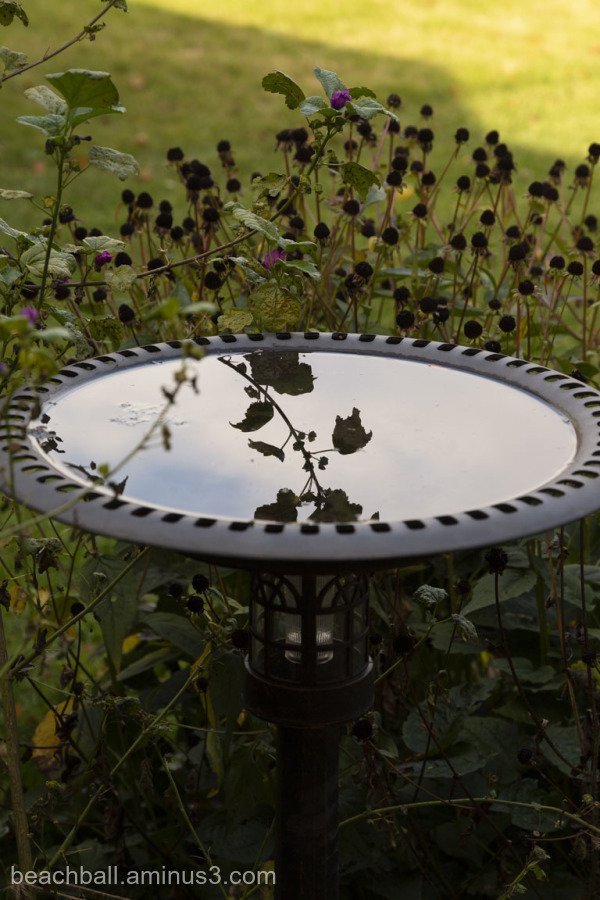 reflection in a birdbath