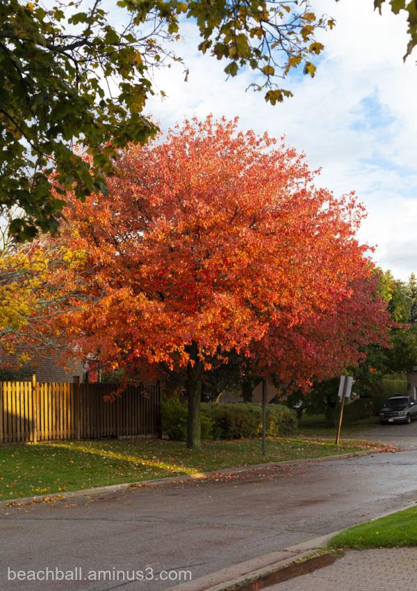 colourful fall tree