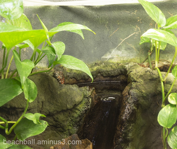 Snake in a zoo setting