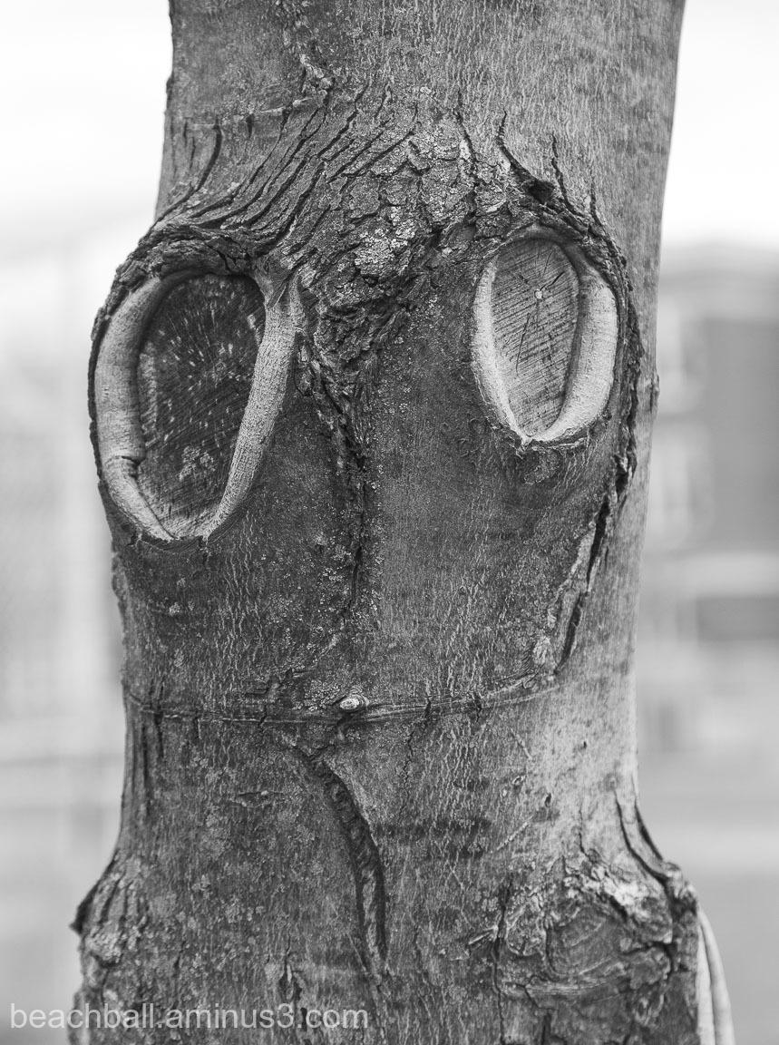 A tree trunk