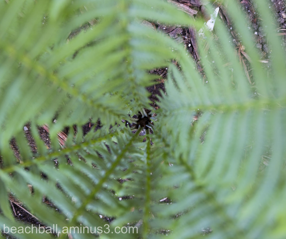 Looking into a fern cluster