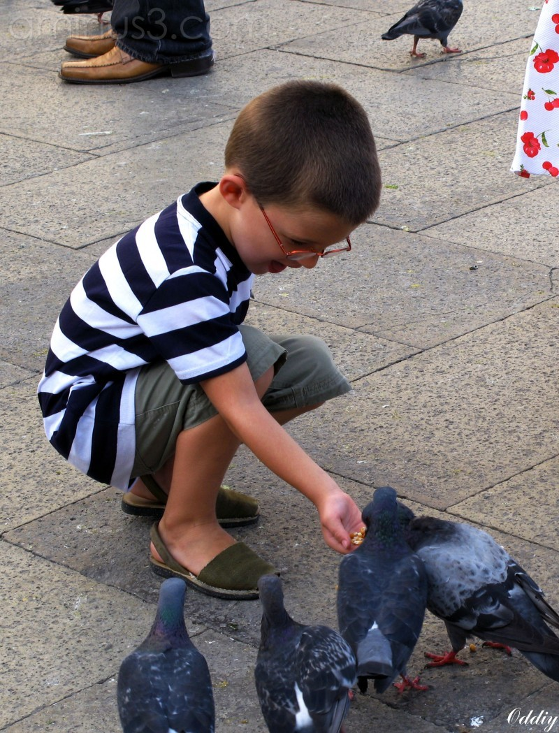 Pigeon San Marco square