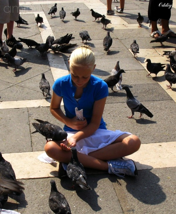 Pigeons of San Marco square (2)