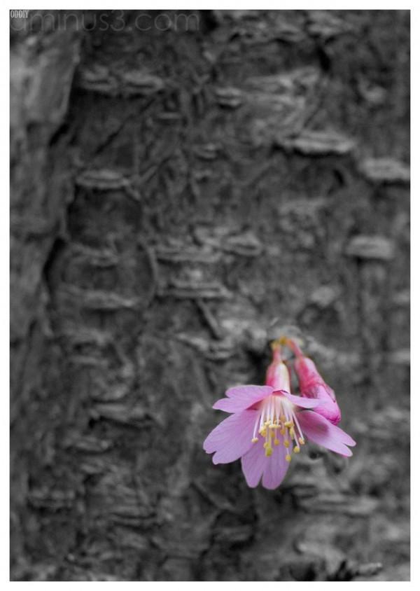Spring (12)
