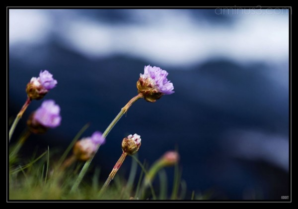Fleurs-sur-Mer  :)
