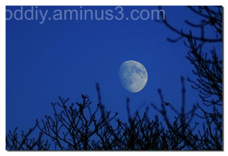 Petit Luna...