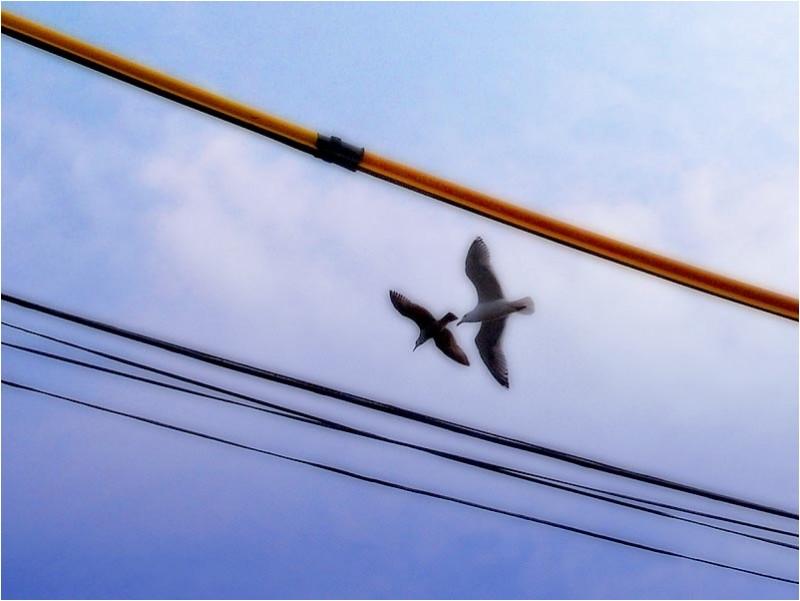 Bird courtship at City Island