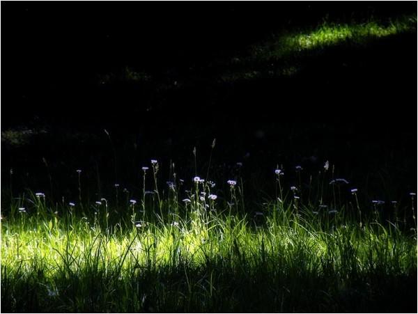 Wildflowers on Roe Pond, Bear Mountain